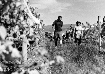 Framingham Wines Documentary Photography