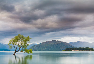 That Tree in Wanaka